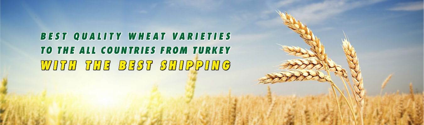 serka-agriculture-wholesale-wheat-min