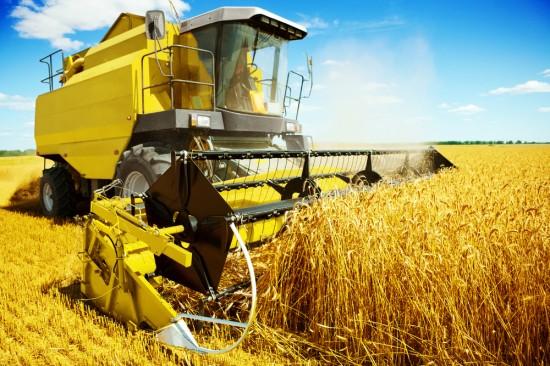 buğday nasıl yetiştirilir?